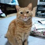 【ある1匹の猫の闘病記】プロローグ…様々な病気で悩んでいる犬猫のために