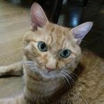 【ある1匹の猫の闘病記】回想録編(1)…突然やってきた2週間に一度程度の激しい嘔吐、そして緊急入院