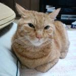 【ある1匹の猫の闘病記】回想録編(2)…急性すい炎からの復活後、再び嘔吐、そして慢性下痢の発生、下された診断名は「消化器型リンパ腫」