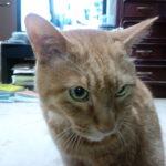 【ある1匹の猫の闘病記】検査後に下された「消化器型リンパ腫」という重い診断と、藁をも掴む思いで始めた「サプリメント」と「自然食」