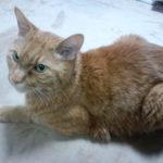 【ある1匹の猫の闘病記】「消化器型リンパ腫」の診断を機に始めた「サプリメントと自然食」で、奇跡的な回復へ