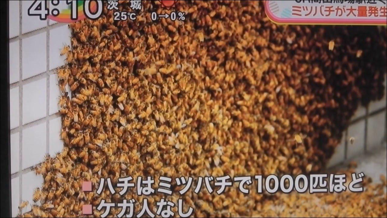 都心のビルの壁にミツバチがビッシリ!その悲しすぎる結末とは?