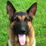 【北海道男児行方不明事件】2匹の警察犬が全く反応しなかったため、ネット上で「父親殺害説」が飛び交う→真相はこうだった!