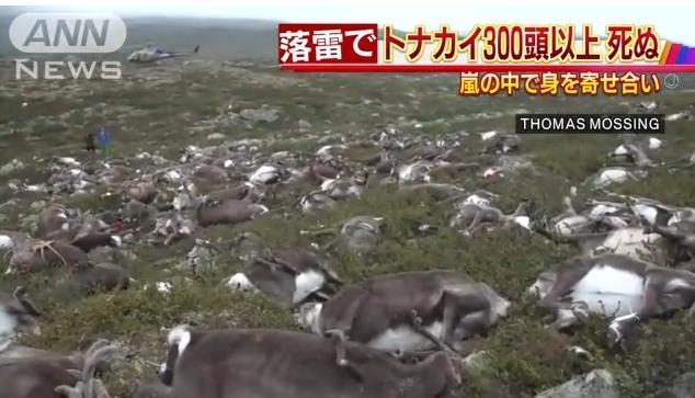 【可哀想】ノルウェーで323頭のトナカイが雷に打たれて死ぬ!現場の光景に思わず絶句…