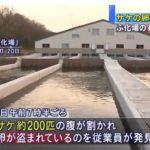 【酷い】北海道・標津川ふ化場のサケ200匹の腹が割かれ、100キロ分の卵が盗まれる!関係者「悔しい気持ちでいっぱい」