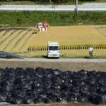 【これが現実】福島・葛尾村の稲刈りの光景に衝撃!田んぼの真横に汚染土の袋が山積み!