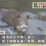 滋賀・彦根市尾末町でイノシシが大暴れ!男性4人が襲われ、一人が左手薬指が壊死する重傷!