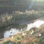 【へ?】八王子・谷地川の下着姿の男性遺体発見事件、死因は凍死!?警察「川で転倒してそのまま低体温で死亡」
