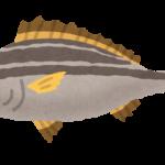 【衝撃】魚に宿る寄生虫「タイノエ(ウオノエ科)」の謎多き生態!世界に400種いる奇妙な生物のルーツは深海だった!?