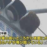 東京・世田谷区の信号機に大量のミツバチが密集!→警察が駆けつけ、業者が駆除!ネット「分蜂では?」「出来れば殺さない方法を」
