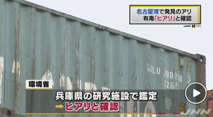 【兵庫に続き…】ついに愛知・名古屋港でも猛毒のヒアリが上陸していたことが確認される!細かく探せばさらに見つかる可能性も…