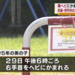 【ヤマカガシか】兵庫・伊丹市に住む小学5年の男児が毒ヘビに噛まれ、一時意識不明の重体に