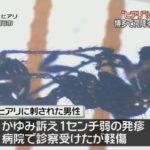 ついに国内初被害!福岡・博多区で中国から輸入されたコンテナ内の荷降ろし中に男性作業員がヒアリに刺される!