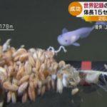 【スゴイ】世界最深の8178Mの深海で泳ぐ魚(シンカイクサウオの一種)の撮影に成功!ジャムステック(海洋研究開発機構)とNHKの共同チームが