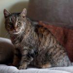 世界で最も高齢と思われる猫「ナツメグ」が32歳(推定)の生涯を終える!1990年にイギリスの老夫婦に拾われ、27年間可愛がられる