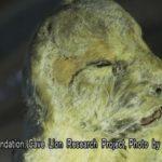 【大発見】ホラアナライオンの赤ちゃんがロシアの永久凍土から氷漬けで見つかる!体毛までが残る完全体は世界初!2~5万年前の個体か