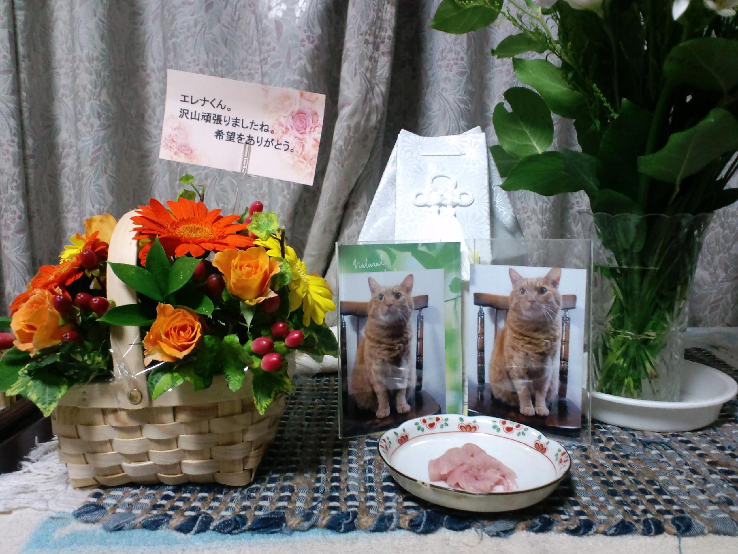 """2年半もの長き病魔(リンパ腫&腎不全)との戦いを終えた茶トラ猫エレナ(享年15)、近代的な""""ペット葬儀""""で家族全員でしめやかに最後の送り出し"""