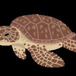 """【タンカー原油流出】奄美大島で、油を飲み込み死んだアオウミガメが!環境省は翌週から周辺海域の生態系を""""緊急調査"""""""