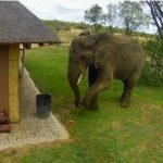 【涙出そう…】芝生に落ちているゴミを鼻と足で器用に拾い、ごみ箱に入れる象さんがスゴすぎる!