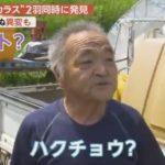 【気になる】青森・平川市に、世にも珍しい「白いカラス」が出現!しかも2羽も!「道の駅いかりがせき」では売り上げが伸び、地元の人も大喜び!