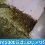 【襲来】大阪港と岸和田市の倉庫で2千匹以上のヒアリを発見、2人が刺される!コンテナからヒアリが逃げ出した可能性も!