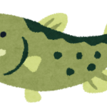 【驚き】幻の怪魚・アカメが大阪湾で捕獲される!環境省が絶滅危惧種に指定!専門家「大阪で見かけることはまずない。学術的に大変貴重」