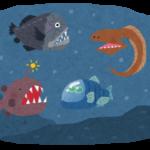 【おぉ!】駿河湾で新種の深海魚を発見!「オナガインキウオ」と命名!クサウオの一種で、東海大の研究チームが論文にまとめる!