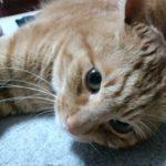 愛猫エレナの「あの日」から1年!一周忌の命日に家族でエレナを偲ぶ食事会を開催!