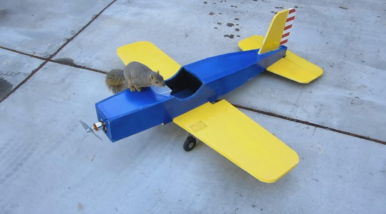 【えぇ!】可愛いリスが、おじいさんのラジコン飛行機を乗っ取って大空に!ネット「なにこれ」「リスくん危ない!」「どうなってるの!?」