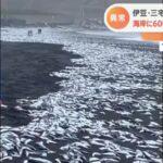 【一体何が】三宅島の海岸に大量の魚が打ち上げられる!イワシから大きなサバまでが砂浜を埋め尽くす!地元の人も驚きの声!「これほど大量の魚が打ち上げられたのは聞いたことがない」