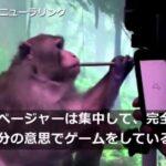 """【ついにここまで】脳にチップを埋め込んだ猿が、""""思念""""だけでゲームをすることに成功!イーロン・マスク氏が動画を公開!人々の脳にチップをインプラントする世界がすぐそこに!"""